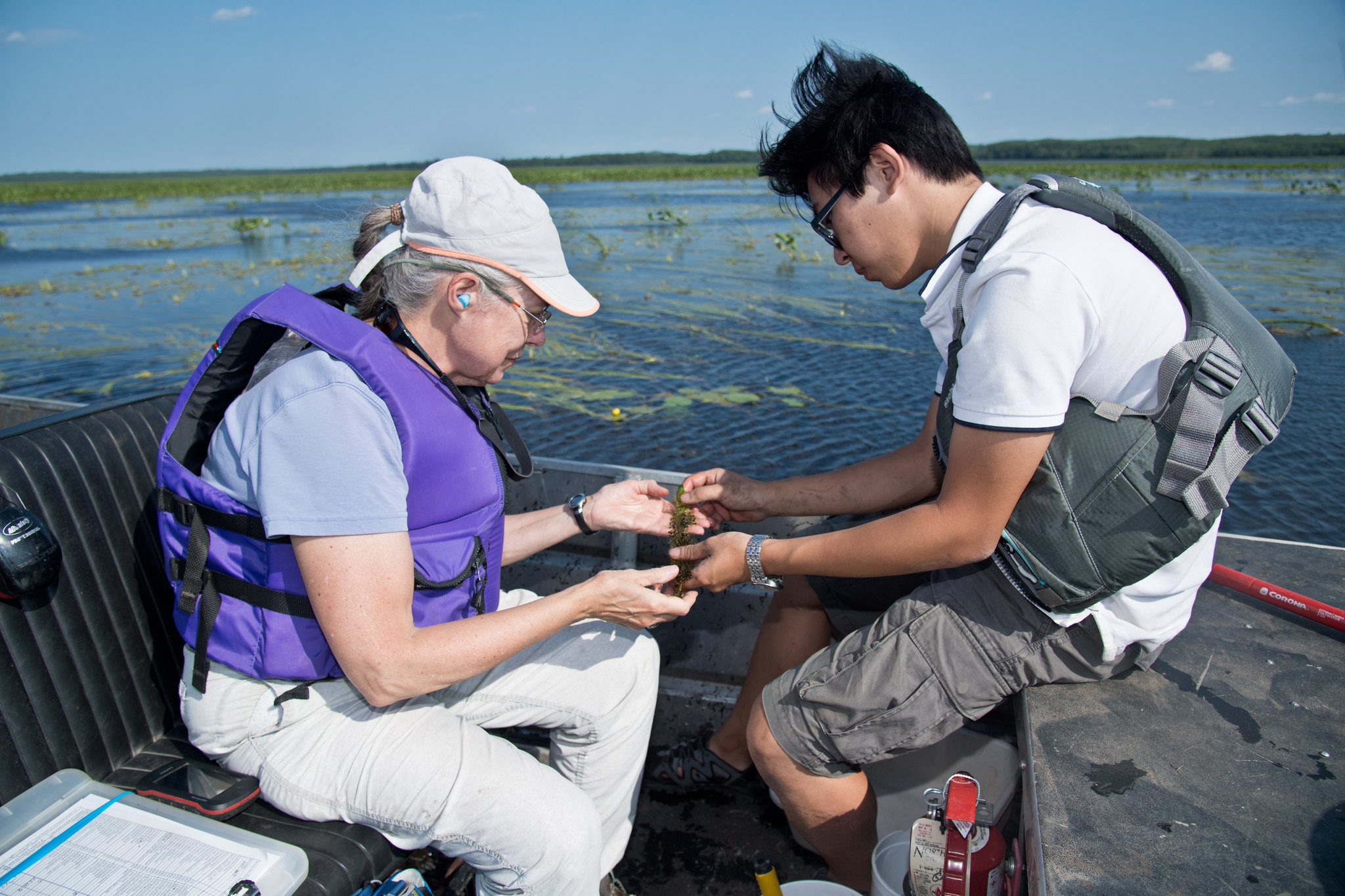 A professor and a graduate student in a boat on a wetland, looking at a plant specimen