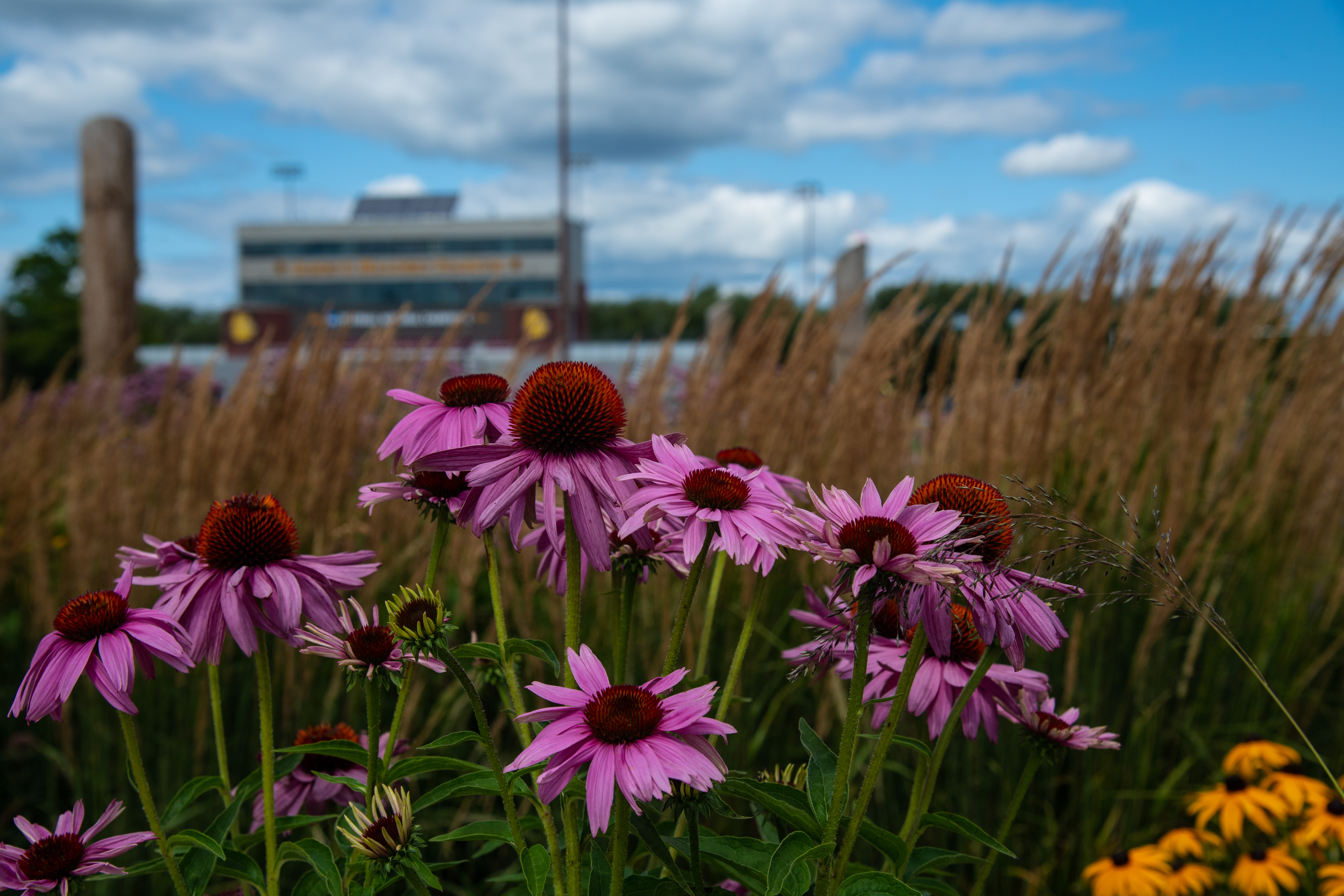 Malosky stadium as seen through a field of wildflowers